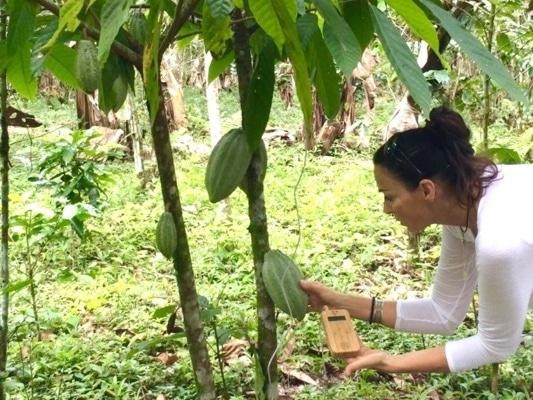 Klänge der Kakaobäume